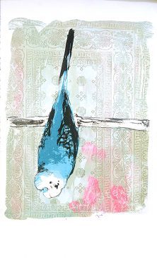 Bruce the budgie